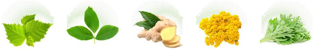 ingredienti di bactefort gocce